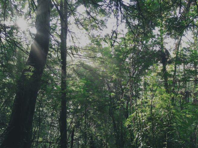 Hutan Curug Sawer